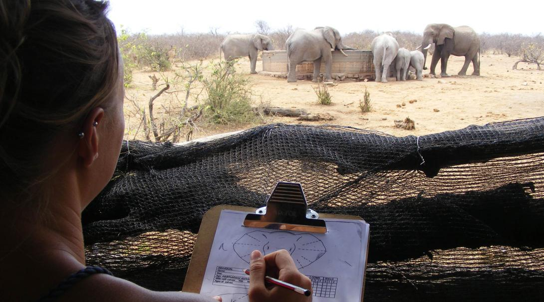 Conservation volunteers filing elephant ID at a waterhole